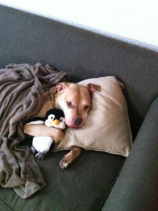 ピットブルとペンギン
