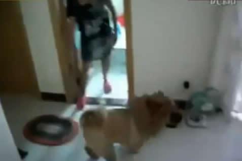 お風呂に絶対入りたくない犬