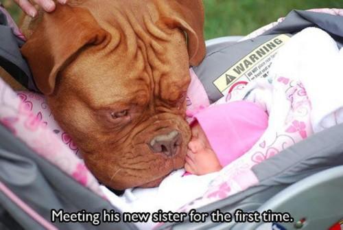 初めての人間の赤ちゃん