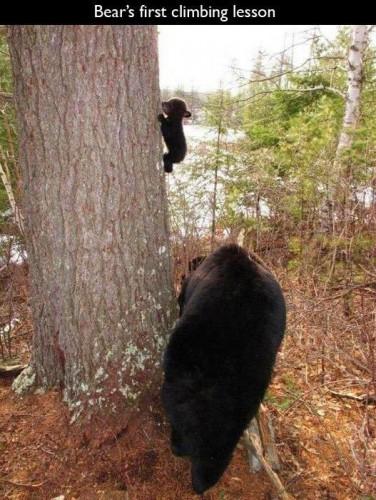 初めての木登り