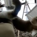 ハンモックと猫