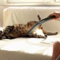 掃除機が好きな猫