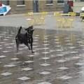 噴水と踊る犬