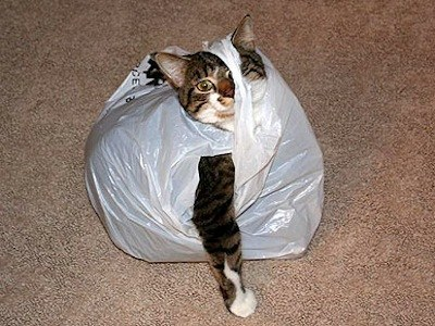 袋に入った猫
