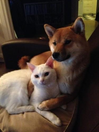 仲良し犬と猫