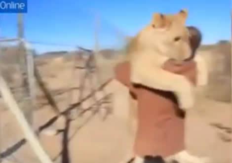 飛びつくライオン