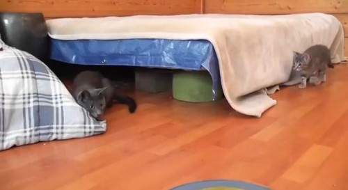 面白動画|驚かされた母ねこ