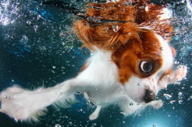 水中の仔犬