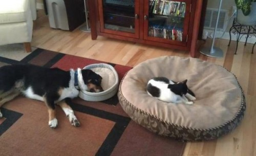 面白画像|犬と猫