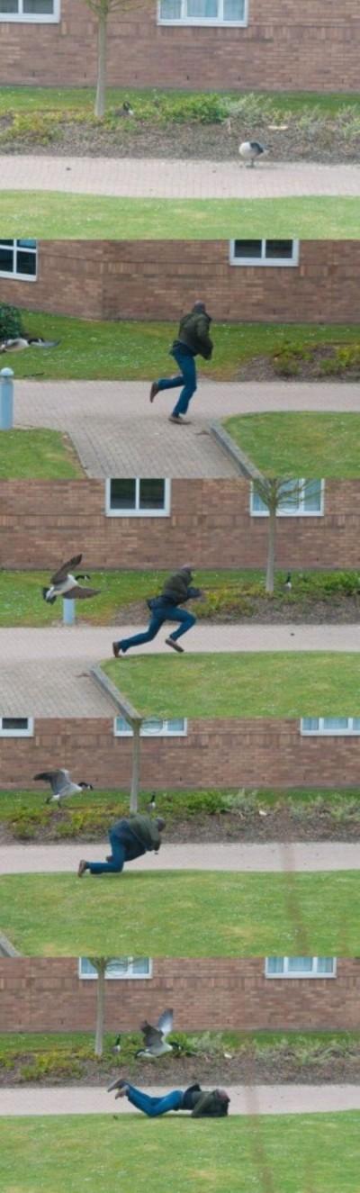 面白画像|鳥の攻撃