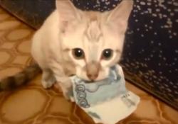 お金を盗んで絶対に返さない仔ねこ