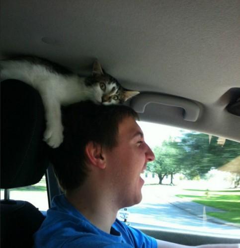 面白画像|変な場所でくつろぐ猫