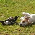鳥と仔犬が仲良く遊ぶ姿