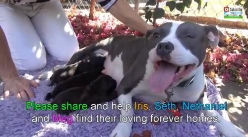 感動動画|捨て犬の母親と仔犬を救出