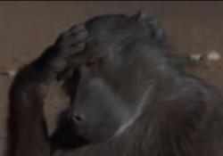 酔っぱらった野生動物