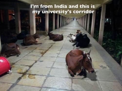 面白インド画像