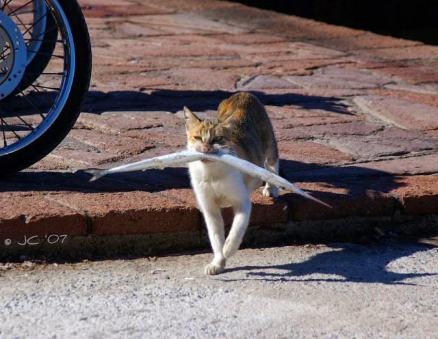 「猫が魚を食べる姿」の画像検索結果