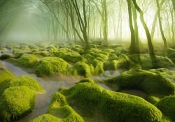 モス湿地帯