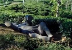 【感動動画】溝にはまってしまった野生の像を救助