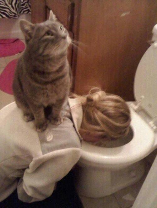 【面白画像】ねこさんだって人の役に立つ!ねこさんの利用方法。