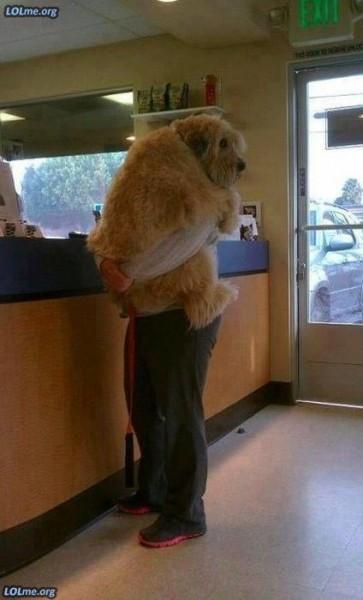 【面白画像】自分がどれだけ大きいか気づいていない犬たち