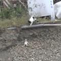 【感動動画】ドキドキハラハラ。崖に落ちた小さな仔ねこを救う母ねこ