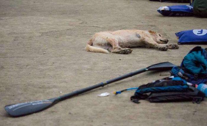 野良犬がマルチ・スポーツの試合にスウェーデンチームと参加
