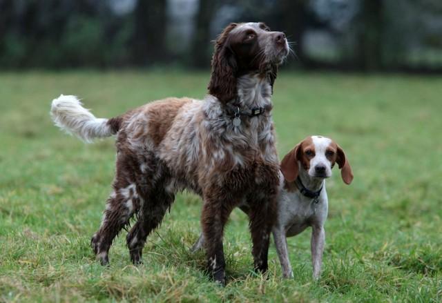 エアガンで撃たれて瀕死の犬に3日間寄り添い続けた犬の友情