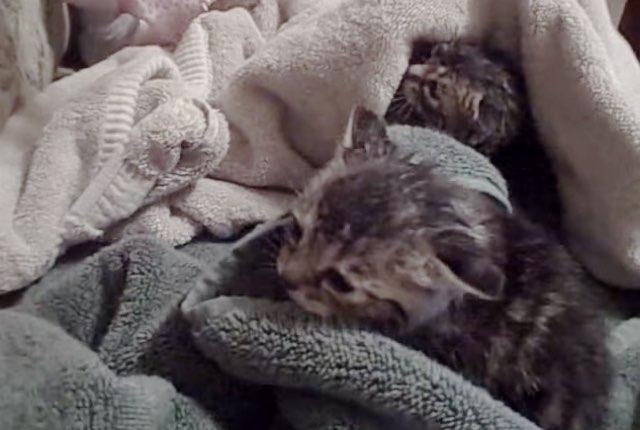 【動画】洪水で水浸しの草むらから仔猫を救出!