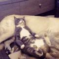【面白GIF動画】爆笑!アニメみたいな反応の動物たち