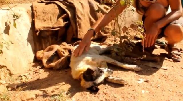 【感動動画】口に針金を巻かれ虐待された犬の心を癒した友達