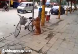 【面白動画】飼い主の自転車を守って、さらに自転車の後ろに乗る賢い犬