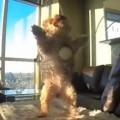 【面白動画】爆笑!取って来いがめちゃくちゃ下手な犬たち