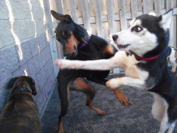 面白い動物喧嘩犬