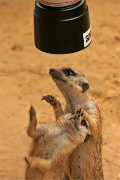 【面白画像】爆笑!無視できない面白動物たち