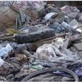 1年前ゴミ山で暮らしていて救出された犬の今の姿