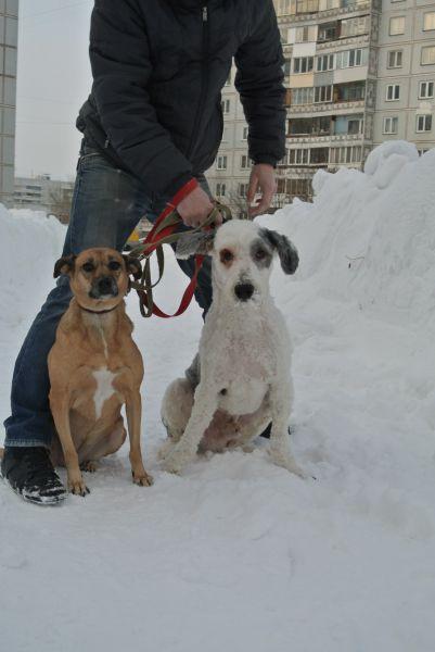 救助された毛玉の塊のようなホームレス犬が変身