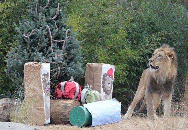 クリスマスプレゼントをとっても気に入った動物たち