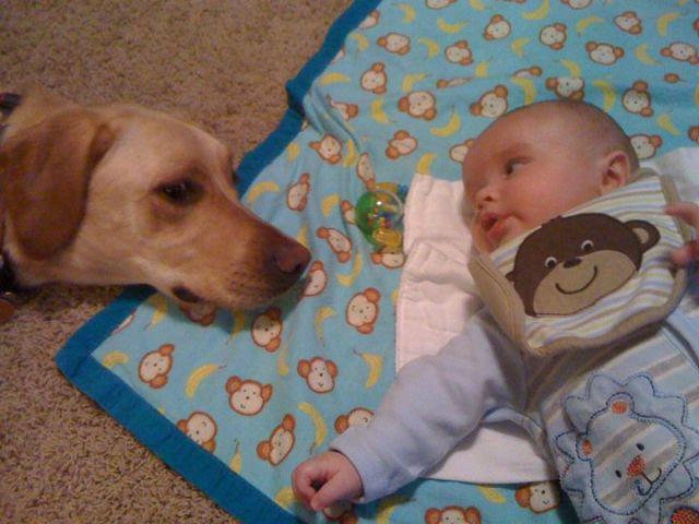 生まれた時からずっと一緒。犬と人間の本当の友情。