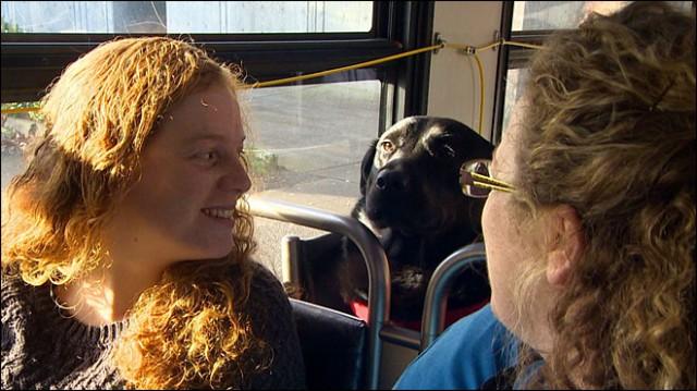 賢過ぎる!可愛すぎる!自分だけでバスに乗り公園に通う飼い犬