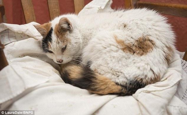 煙突に閉じ込められてしまった猫が水・食糧無しで6週間生き延びた!