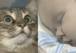 お手柄!野良ねこが捨て子の赤ちゃんを救った。