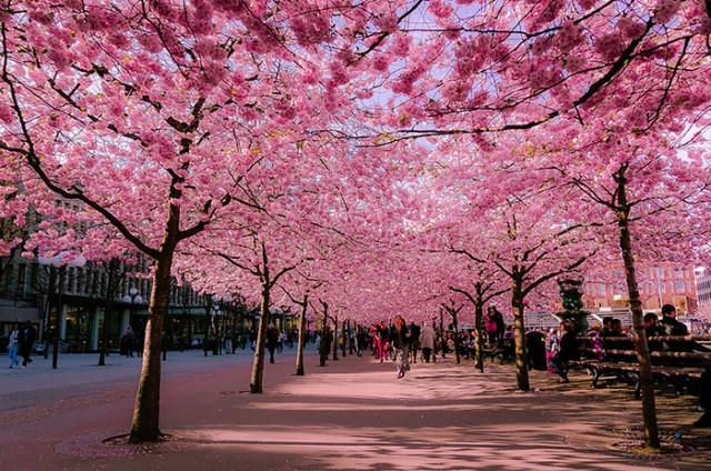 行ってみたい!世界のロマンチックで美しい並木道
