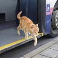 犬だけじゃない!ねこだって独りでバスに乗っていた!