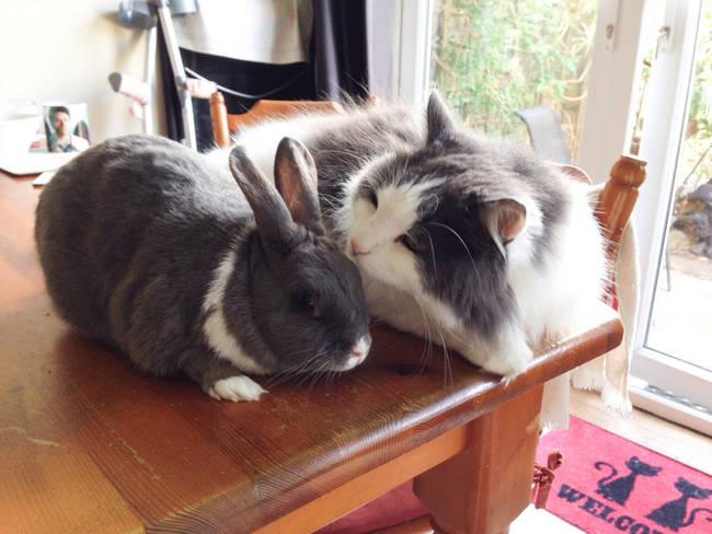 【画像】リア充な動物のカップルが可愛過ぎる!