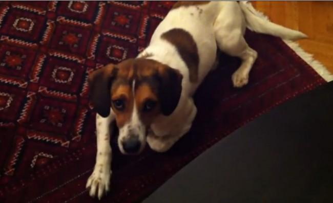 【面白動画】ねこさんの不意打ちアタック!人間に何か言いたげな犬。