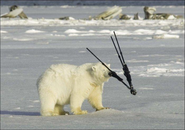 【画像】シロクマさんたちのおちゃめな写真集
