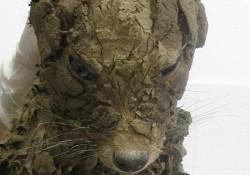 泥だらけの穴から救いだされたこの子を洗った結果