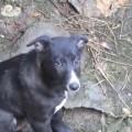【動画】井戸に落ちた仔犬が救助され犬の家族と再会し大はしゃぎ(インド)