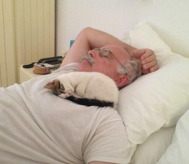 ねこが添い寝してくれるギリシャのホテル